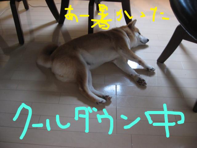 f:id:maki-mama:20090227172405j:image:w300