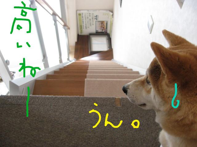 f:id:maki-mama:20090301084116j:image:w300