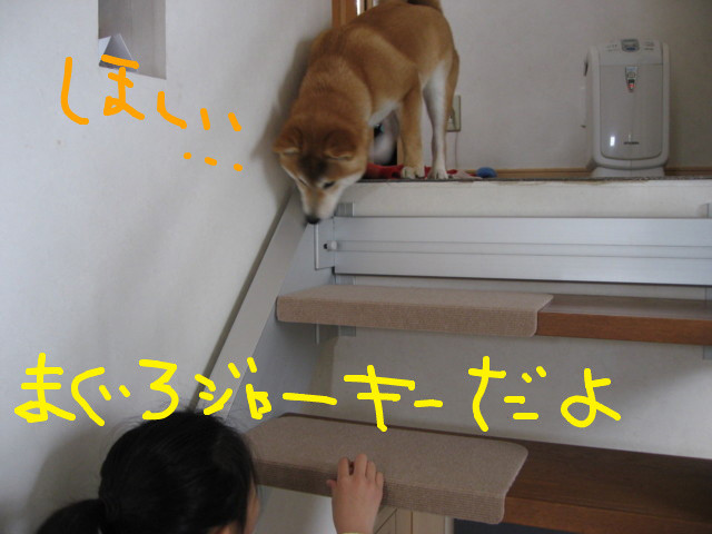 f:id:maki-mama:20090301153656j:image:w300