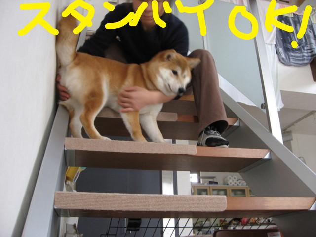 f:id:maki-mama:20090301153659j:image:w300