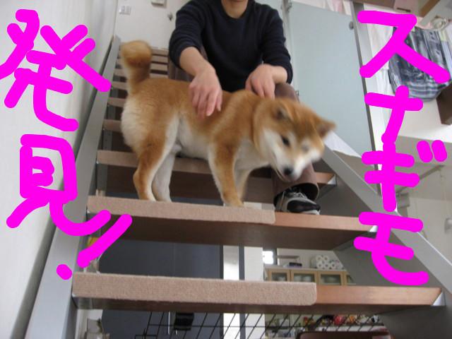 f:id:maki-mama:20090301153700j:image:w300