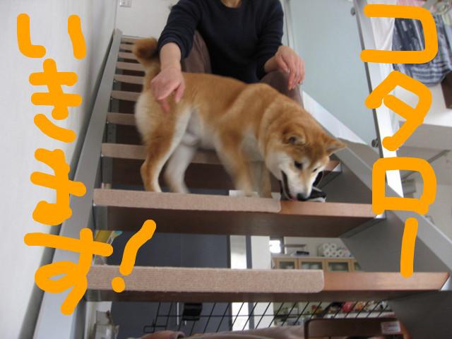 f:id:maki-mama:20090301153701j:image:w300