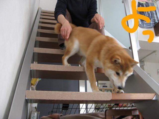 f:id:maki-mama:20090301153702j:image:w300
