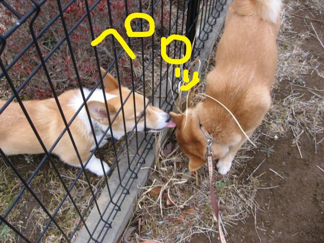 f:id:maki-mama:20090303201316j:image:w300