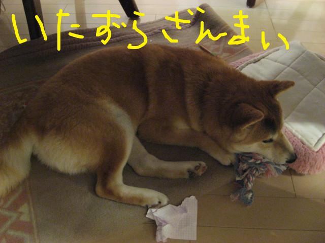 f:id:maki-mama:20090306180953j:image:w300