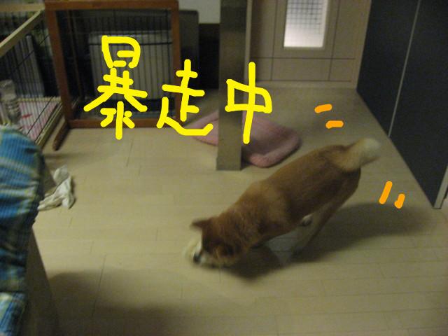 f:id:maki-mama:20090306180959j:image:w300