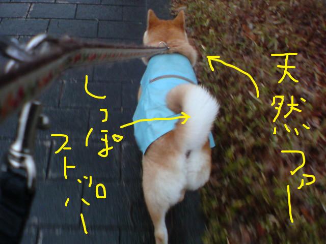 f:id:maki-mama:20090306181347j:image:w300