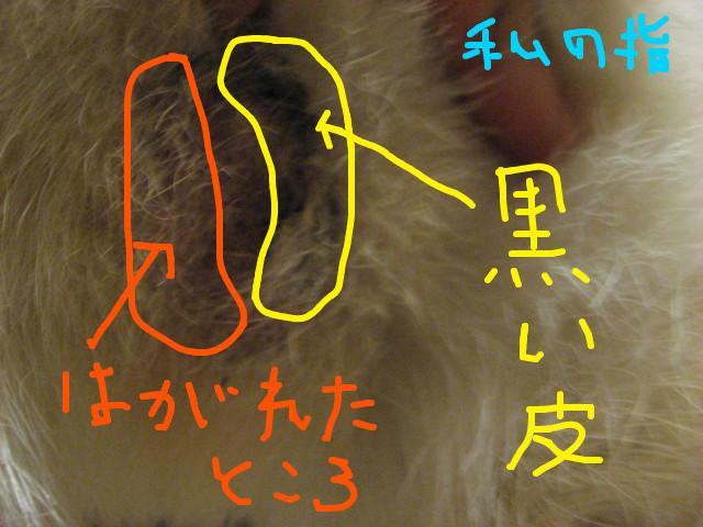 f:id:maki-mama:20090307214619j:image:w300