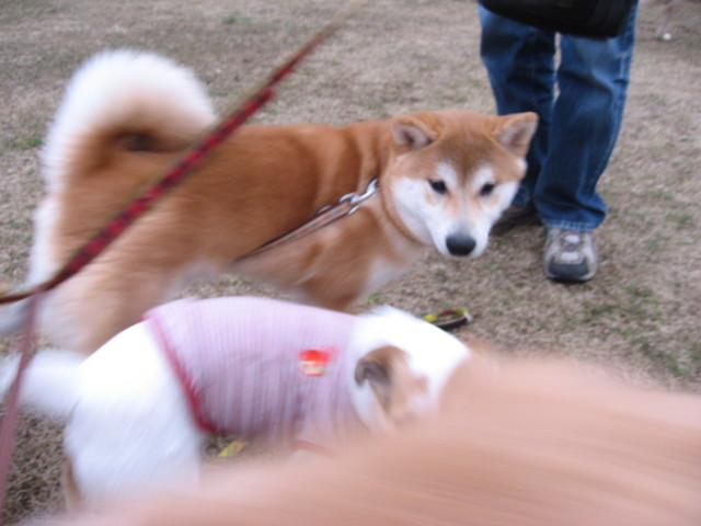 f:id:maki-mama:20090308201905j:image:w300
