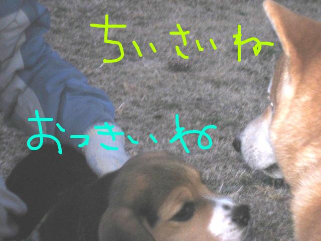f:id:maki-mama:20090312074301j:image:w300