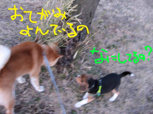 f:id:maki-mama:20090312074302j:image:w300