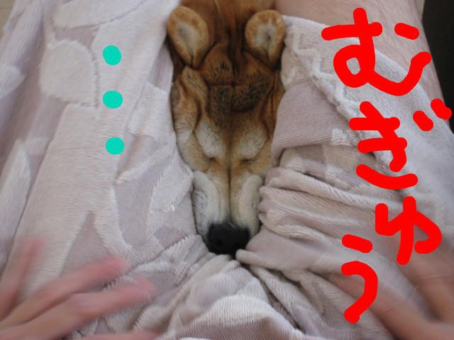 f:id:maki-mama:20090312095852j:image:w300