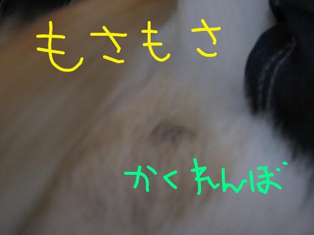 f:id:maki-mama:20090313075149j:image:w300