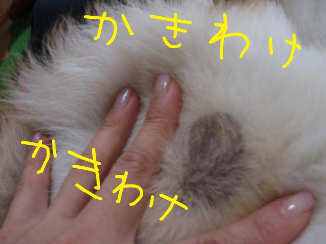 f:id:maki-mama:20090313075150j:image:w300