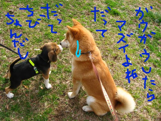 f:id:maki-mama:20090313111152j:image:w300