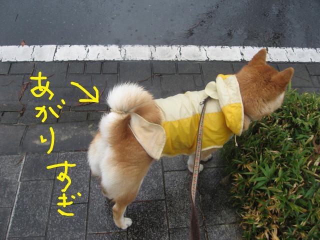 f:id:maki-mama:20090314090040j:image:w300