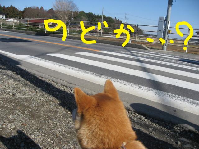 f:id:maki-mama:20090315113711j:image:w300