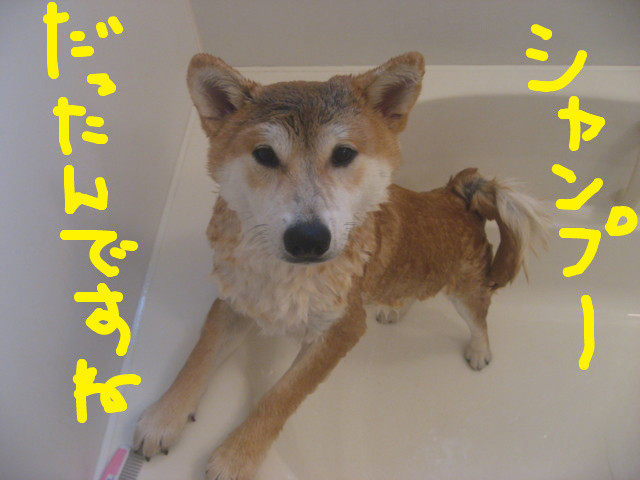 f:id:maki-mama:20090315113713j:image:w300