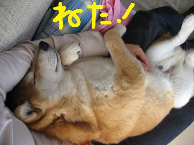 f:id:maki-mama:20090315153628j:image:w300