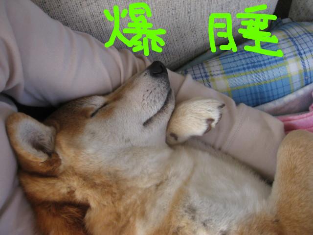 f:id:maki-mama:20090315153629j:image:w300