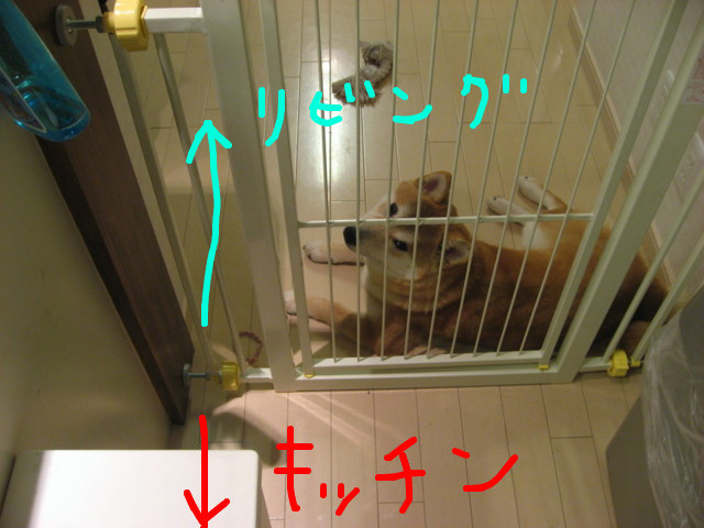 f:id:maki-mama:20090316213459j:image:w300