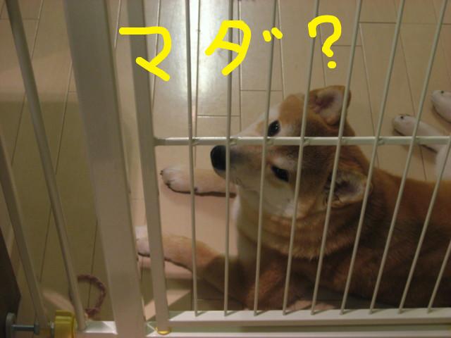 f:id:maki-mama:20090316213500j:image:w300