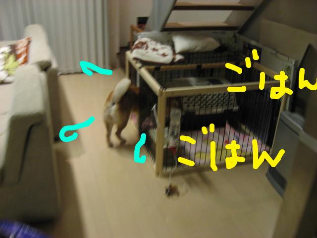 f:id:maki-mama:20090316213503j:image:w300