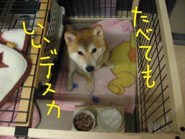 f:id:maki-mama:20090316213504j:image:w300