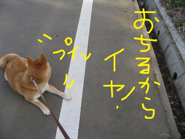 f:id:maki-mama:20090318124834j:image:w300