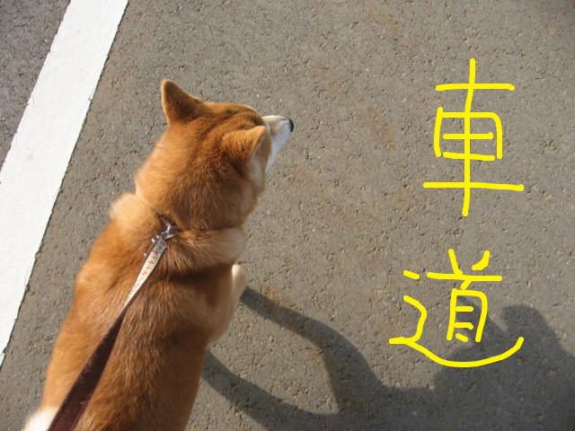 f:id:maki-mama:20090318124835j:image:w300