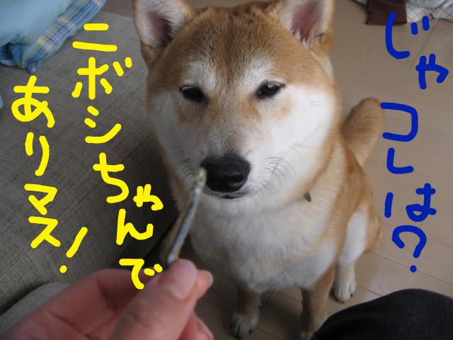 f:id:maki-mama:20090318130359j:image:w300
