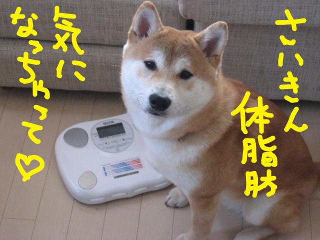 f:id:maki-mama:20090318135345j:image:w300