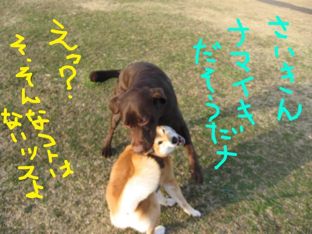 f:id:maki-mama:20090319102558j:image:w300