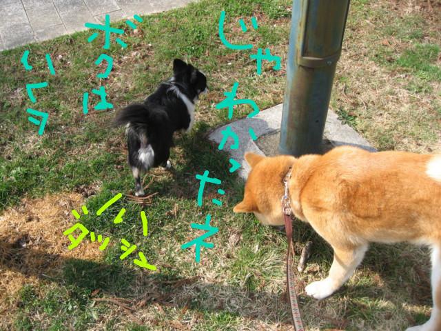 f:id:maki-mama:20090319102603j:image:w300