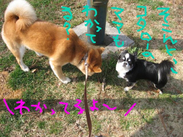 f:id:maki-mama:20090319102605j:image:w300