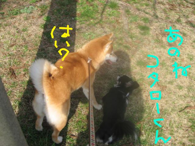 f:id:maki-mama:20090319102606j:image:w300
