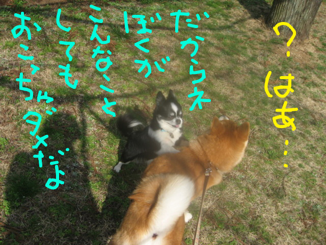 f:id:maki-mama:20090319102608j:image:w300