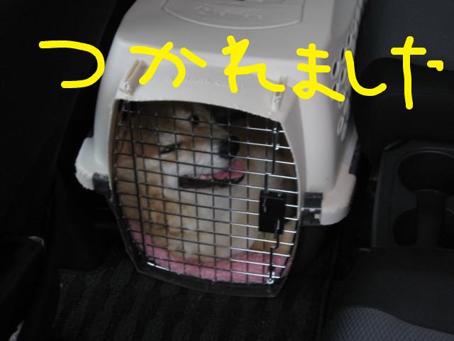 f:id:maki-mama:20090322163031j:image:w300