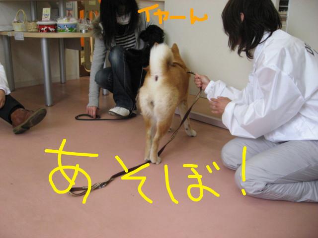 f:id:maki-mama:20090322163033j:image:w300