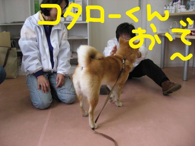 f:id:maki-mama:20090322163035j:image:w300
