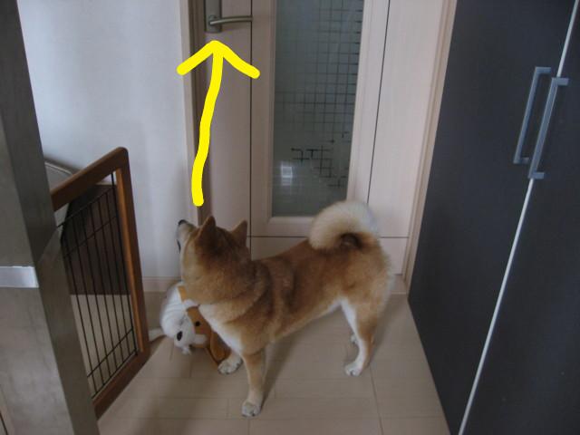 f:id:maki-mama:20090323160619j:image:w300