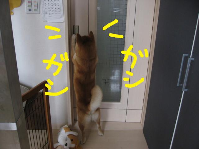f:id:maki-mama:20090323160620j:image:w300