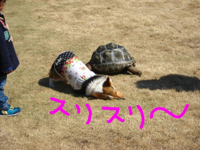 f:id:maki-mama:20090326183530j:image:w300