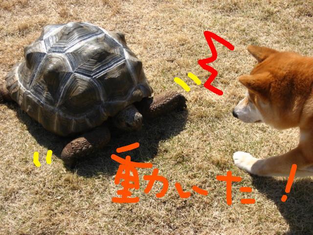f:id:maki-mama:20090326183531j:image:w300