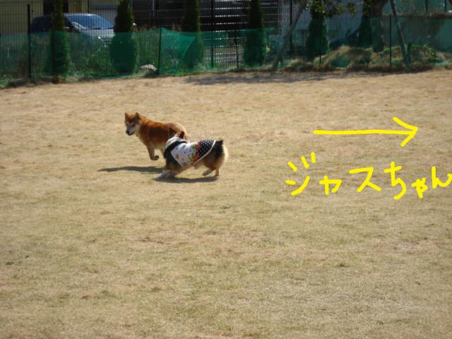 f:id:maki-mama:20090326183537j:image:w300