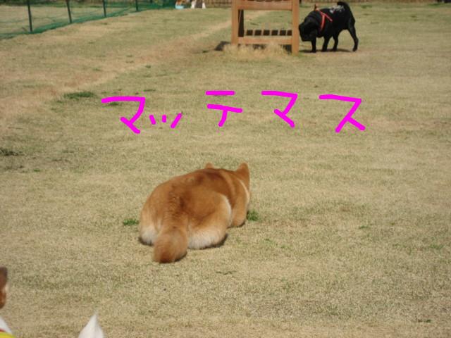 f:id:maki-mama:20090326183540j:image:w300