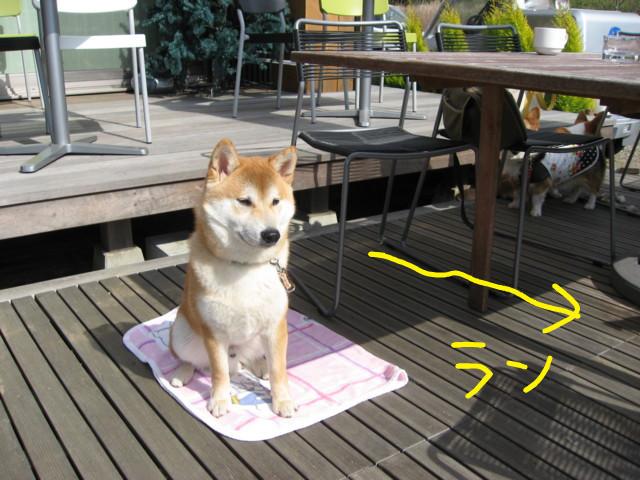 f:id:maki-mama:20090326183543j:image:w300
