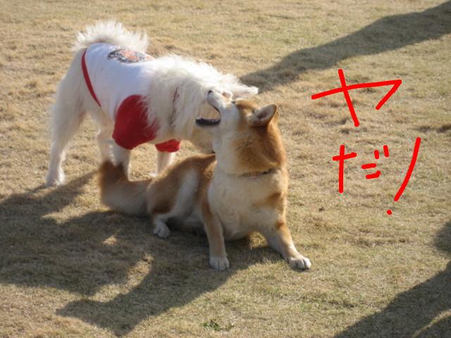 f:id:maki-mama:20090326183549j:image:w300