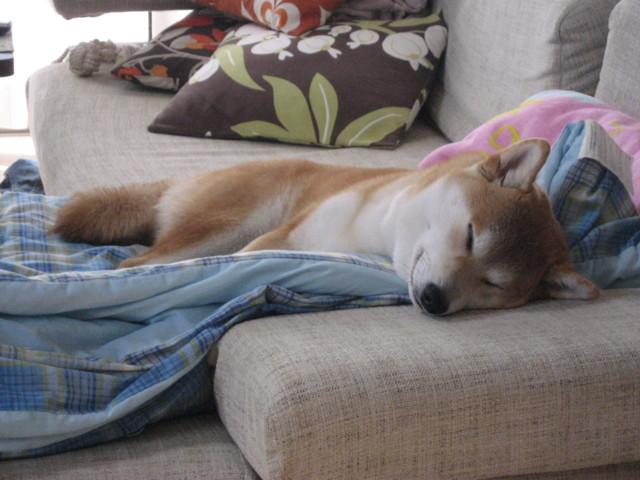 f:id:maki-mama:20090330095932j:image:w300