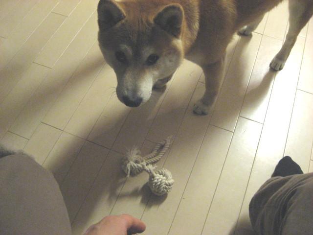 f:id:maki-mama:20090331214114j:image:w200